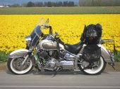 2003 Yamaha XVS 1100 A Drag Star Classic photo